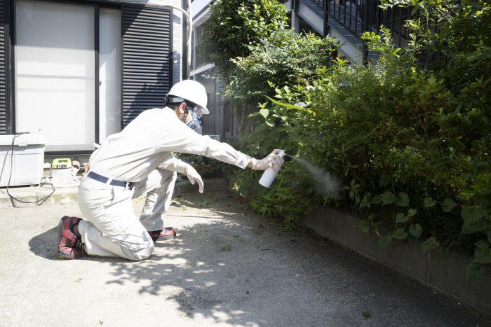 空き家の害虫駆除の方法を紹介!手遅れになる前に退治しよう!